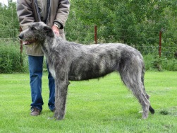 Mamma Mia von den Erzminen Our import from Germany also from the Wolfhouse lines in Denmark